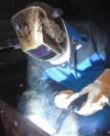 Image - Tips on How Welding Consumables Can Help Solve the Problems of Porosity and Burnbacks