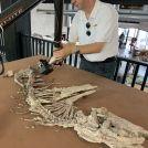 Image - Handheld 3D Scanner Used for Prehistoric Application
